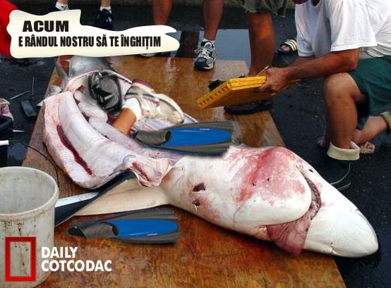 rechin3